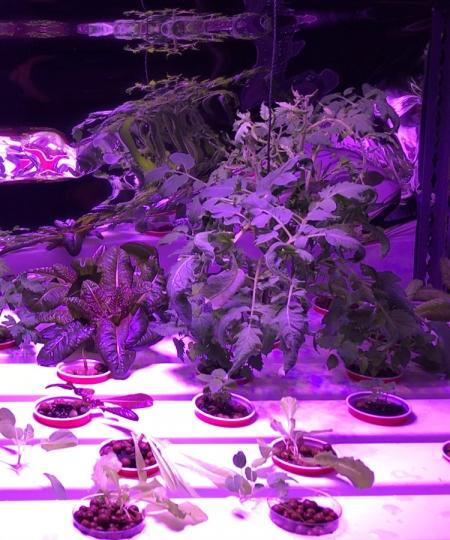hydroponics_nft